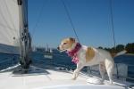 sail 048