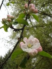 spring 2012 019