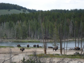 The bison and wildlife weren't as big a deal to us as knowing we were high in the wilderness on top of a caldera.